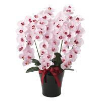 【送料無料】プレミアム胡蝶蘭5本立P (造花) 高さ75cm 光触媒 (652A180)