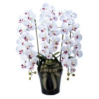 【送料無料】プレミアム胡蝶蘭5本立W/AB (造花) 高さ75cm 光触媒 (653A180)
