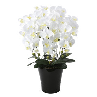 【送料無料】クイーン胡蝶蘭5本立W (造花) 高さ75cm 光触媒 (654A150)
