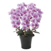 【送料無料】クイーン胡蝶蘭5本立L (造花) 高さ75cm 光触媒 (655A150)