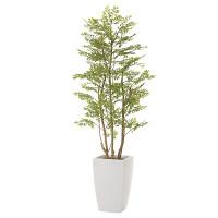 アーバンゴールデンリーフ (人工観葉植物) 高さ180cm 光触媒 (714A680)