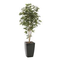 【送料無料】アーバンベンジャミン (人工観葉植物) 高さ180cm 光触媒 (715A550)