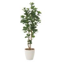 【送料無料】クルシア (人工観葉植物) 高さ160cm 光触媒 (719A360)