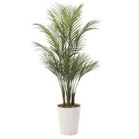 【送料無料】アレカパーム (人工観葉植物) 高さ135cm 光触媒 (720A275)
