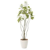 【送料無料】フィカスブランチツリー1.3 (人工観葉植物) 高さ130cm 光触媒機能付 (723A180)