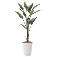 【送料無料】ストレチア 1.6 (人工観葉植物) 高さ160cm 光触媒機能付 (729A250)