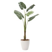 【送料無料】くわず芋5 (人工観葉植物) 高さ135cm 光触媒 (730A240)