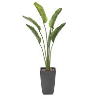 オーガスタ (人工観葉植物) 高さ185cm 光触媒 (800A600)