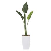 【送料無料】オーガスタ (人工観葉植物) 高さ175cm 光触媒 (801A500)