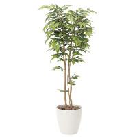 【送料無料】ケヤキ (人工観葉植物) 高さ180cm 光触媒 (807A400)