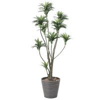 【送料無料】ドラセナ (人工観葉植物) 高さ150cm 光触媒 (808A250)