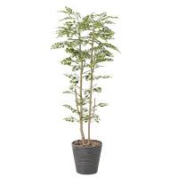 【送料無料】ゴールデンツリー (人工観葉植物) 高さ160cm 光触媒 (811A350)