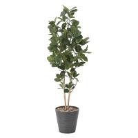 【送料無料】パンの木 (人工観葉植物) 高さ160cm 光触媒 (815A320)
