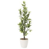 【送料無料】レモン (人工観葉植物) 高さ160cm 光触媒 (816A300)