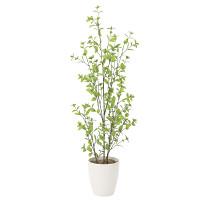 【送料無料】ユーカリ (人工観葉植物) 高さ130cm 光触媒 (819A230)