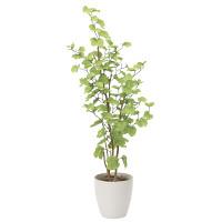 【送料無料】バウヒニア (人工観葉植物) 高さ160cm 光触媒 (820A300)