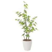 【送料無料】バウヒニア (人工観葉植物) 高さ130cm 光触媒 (821A220)