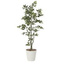【送料無料】フィカスツリー (人工観葉植物) 高さ180cm 光触媒 (822A380)