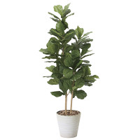 【送料無料】カシワバゴム (人工観葉植物) 高さ160cm 光触媒 (825A380)