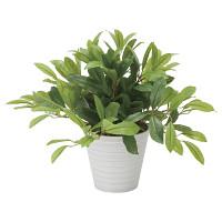 ローレル (人工観葉植物) 高さ43cm 光触媒 (828A75)