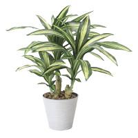 【送料無料】幸福の木 (人工観葉植物) 高さ60cm 光触媒 (829A120)