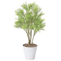 ミニメープル(ポリ製) (人工観葉植物) 高さ70cm 光触媒機能付 (830G95)