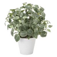 フィットニアM(フロック加工) (人工観葉植物) 高さ48cm 光触媒機能付 (832G90)
