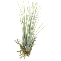 エアープランツL(ポリ製) (壁掛タイプ) (造花) 高さ29cm 光触媒 (867A38)