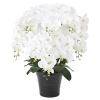 【送料無料】フレッシュ胡蝶蘭W 8本立 (造花) 高さ75cm 光触媒 (877A300)