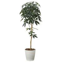 【送料無料】【2020年新商品】デザインパキラ1.6 (人工観葉植物) 高さ160cm 光触媒機能付 (2008A260)