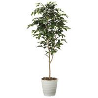 【送料無料】【2020年新商品】ベンジャミン1.6 (人工観葉植物) 高さ160cm 光触媒機能付 (2015A250)