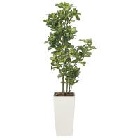 【送料無料】【2020年新商品】シェフレラ1.3 (人工観葉植物) 高さ130cm 光触媒機能付 (2029A200)