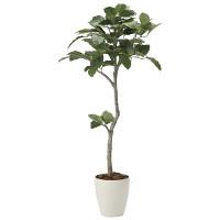 【送料無料】【2020年新商品】ベンガル菩提樹1.35 (人工観葉植物) 高さ135cm 光触媒機能付 (2031A250)