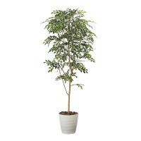 【送料無料】【2020年新商品】トネリコ 1.8 (人工観葉植物) 高さ180cm 光触媒機能付 (2094A350)