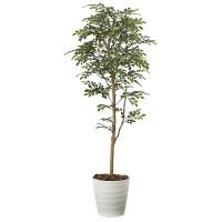 【送料無料】【2020年新商品】トネリコ 1.6 (人工観葉植物) 高さ160cm 光触媒機能付 (2107A300)