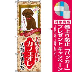 のぼり旗 トイプードル カフェオレ 入荷 (GNB-2456) [プレゼント付]