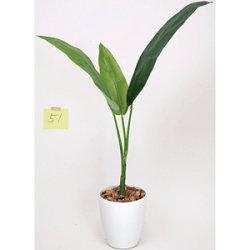【送料無料】トラベラーズパーム 1.1 (人工観葉植物) 高さ110cm 光触媒機能付 (205G120)
