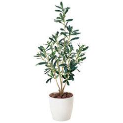 オリーブ (人工観葉植物) 高さ73cm 光触媒 (379A60)