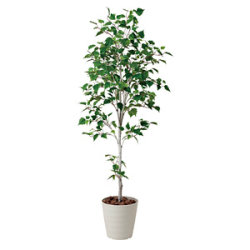 【送料無料】白樺シングル1.8 (人工観葉植物) 高さ180cm 光触媒機能付 (421A300)