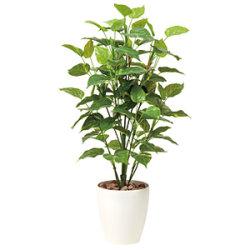 【送料無料】ポトス (人工観葉植物) 高さ100cm 光触媒 (513A150)