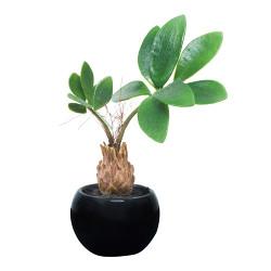 パキラインポット(ポリ製) (人工観葉植物) 高さ20cm 光触媒機能付 (520A25)