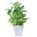 ポトスポット (人工観葉植物) 高さ19cm 光触媒 (434A20)