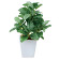 フィットニアポット (人工観葉植物) 高さ19cm 光触媒 (436A20)
