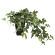 メイプルアイビー (人工観葉植物) 高さ35cm 光触媒 (635A60)