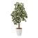 【送料無料】斑入シェフレラ90 (人工観葉植物) 高さ90cm 光触媒 (733A150)