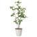 サラサドウダン (人工観葉植物) 高さ90cm 光触媒 (827A85)