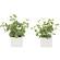 ハートリーフ・ポトス2個セット (人工観葉植物) 高さ16cm 光触媒 (864A35)