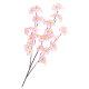 中枝 シルク桜