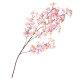 大枝 シルク桜