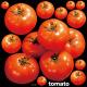 トマト 看板・ボード用イラストシール (W285×H285mm)